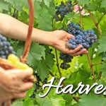 2015 Word of the Year:  Harvest