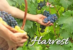 HarvestWOTY
