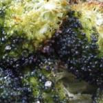 Recipe: Broccoli Crunch